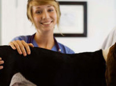 Certificate in Becoming a Veterinary Assistant Online Course