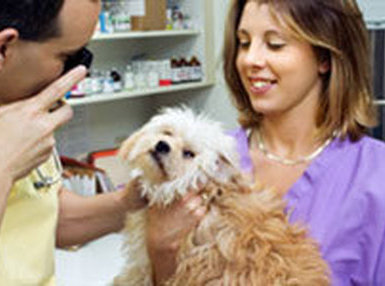 Certificate in Becoming a Veterinary Assist II Online Course