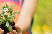 Certificate in Growing Plants for Fun and Profit Online Course