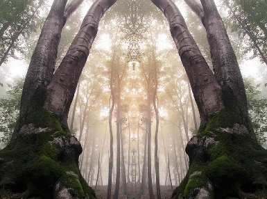 Hedgewitchery Online Certificate Course
