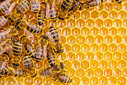Certificate In Natural Beekeeping Online Course