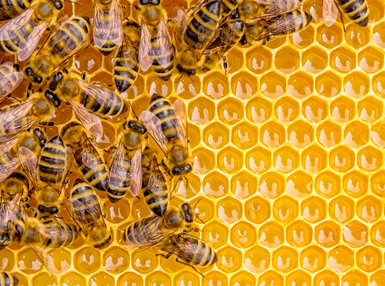 Diploma In Natural Beekeeping Online Course