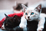 Cattery Business Online Certificate Course