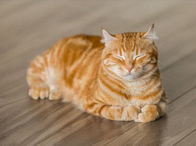 Introduction to Cat Grooming and Health Online Certificate Course