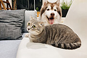 Introduction to Kennel and Cattery Management Online Certificate Course