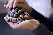 Introduction to Reptile Care Online Certificate Course