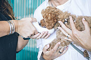 The Animal Care Collection Online Bundle, 6 Certificate Courses