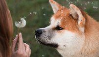 Animal Assisted Therapy Certification