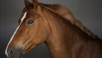 Equine Psychology Online Certificate Course