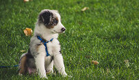 Pet Bereavement Counsellor Online Certificate Course