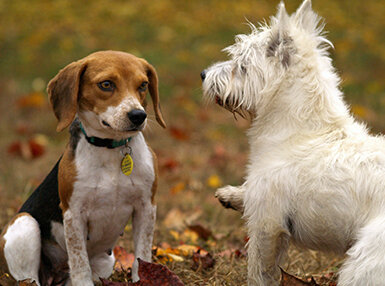 Canine Communication Online Certificate Course