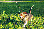 Pet Sitting & Dog Walking Online Certificate Course