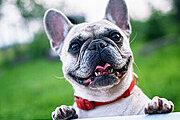 Dog Grooming Professional Online Certificate Course