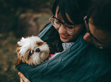 Pet Grooming Advanced Online Certificate Course