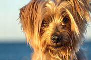 Dog Grooming Professional Online Bundle, 5 Certificate Courses - Payment Plan
