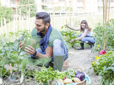 Certificate in Starting A Vegetable Garden Online Course