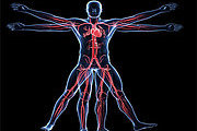 Certificate in Anatomy and Physiology - Advanced Online Course