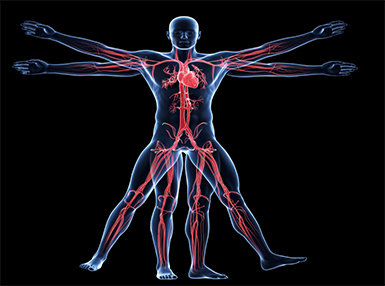 Anatomy and Physiology - Advanced Online Certificate Course