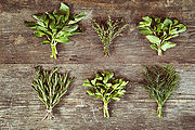 Certificate in Culinary Herbs Online Course