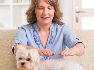 Animal Reiki Online Certificate Course