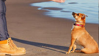 Certificate in Dog Training Online Course