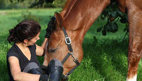 Diploma In Horse Care and Management Online Course