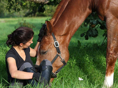 Certificate in Horse Care and Management Online Course