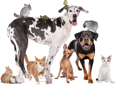 Pet Care Business Online Diploma Course