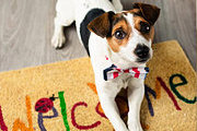 Diploma In Puppy Training Online Course