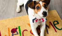 Certificate in Puppy Training Online Course