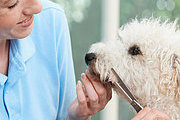 Certificate in Dog Grooming Online Course