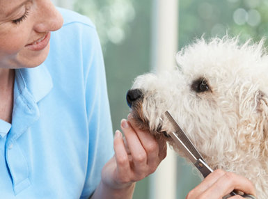 Diploma In Dog Grooming Online Course