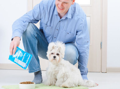 Diploma In Pet Nutrition Online Course