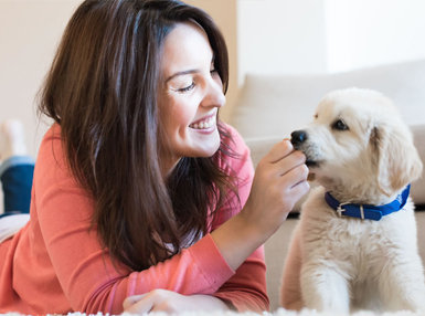 Pet Psychology Online Diploma Course