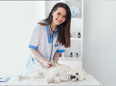 Veterinary Assistant Online Bundle, 2 Certificate Courses