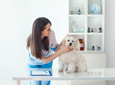 Veterinary Assistant Online Bundle, 5 Certificate Courses