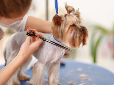 Dog Grooming Professional Online Bundle, 2 Certificate Courses