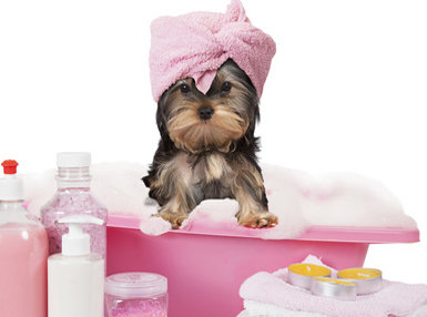 Dog Grooming Professional Online Bundle, 3 Certificate Courses