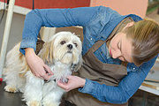 Dog Grooming Professional Online Bundle, 4 Certificate Courses