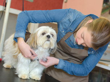 Pet Grooming Advanced Online Bundle, 4 Certificate Courses