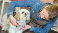Ultimate Pet Care Business Bundle, 10 Certificate Courses