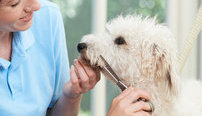 Pet Care Business Online Bundle, 3 Certificate Courses