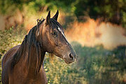 Horse Care and Management Online Bundle, 3 Certificate Courses