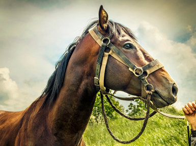 Ultimate Equine Psychology Online Bundle, 10 Certificate Courses