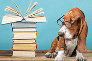 Puppy Training Online Bundle, 3 Certificate Courses