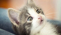 Feline Behavior and Psychology Online Bundle, 2 Certificate Courses