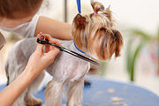 Dog Grooming Online Bundle, 2 Certificate Courses