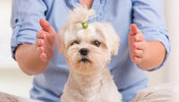 Animal Reiki Online Bundle, 5 Certificate Courses