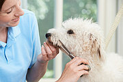 Dog Grooming Online Bundle, 5 Certificate Courses