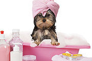 Ultimate Dog Grooming Online Bundle, 10 Certificate Courses
